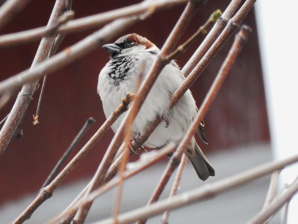 Oiseau dans un arbre.